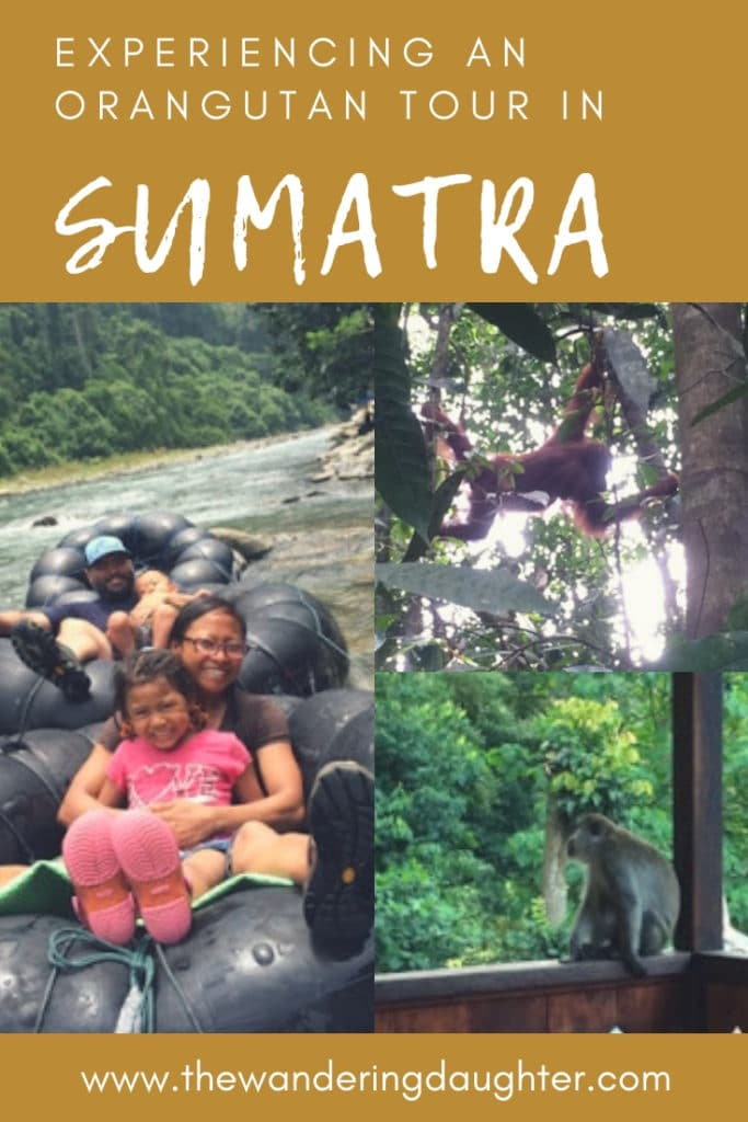 Experiencing an Orangutan Tour in Sumatra | The Wandering Daughter