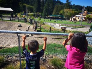 Children looking at an elephant at the Portland Zoo in Oregon, one of the top things to do in Portland