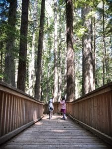 Kids exploring easy hikes at North Cascades National Park