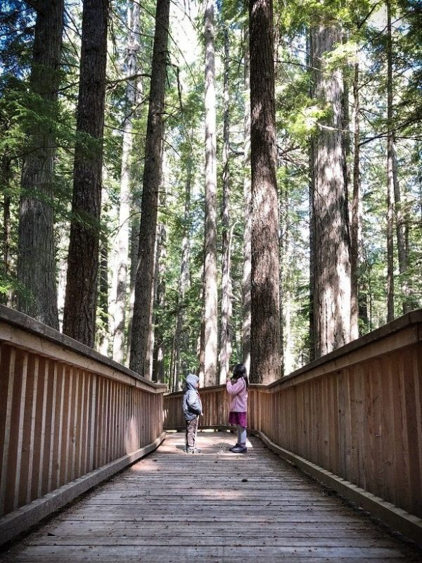 Two kids on a board walk during hikes at North Cascades