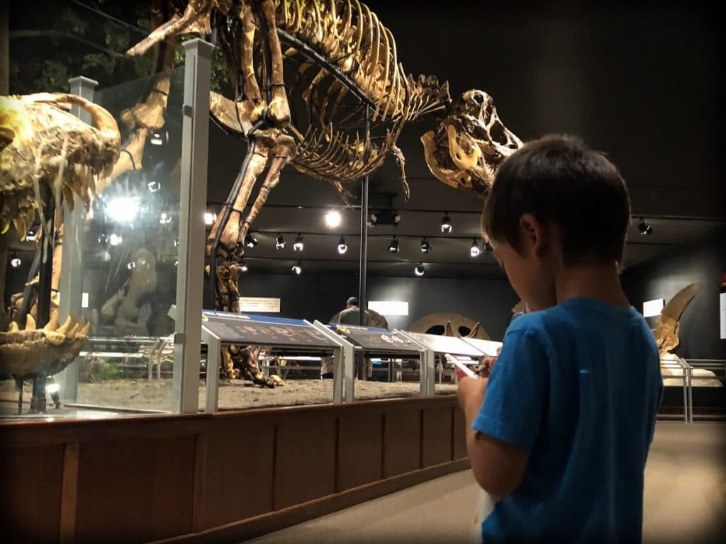 A boy from a world schooling family takes notes while looking at a dinosaur exhibit at the Museum of the Rockies