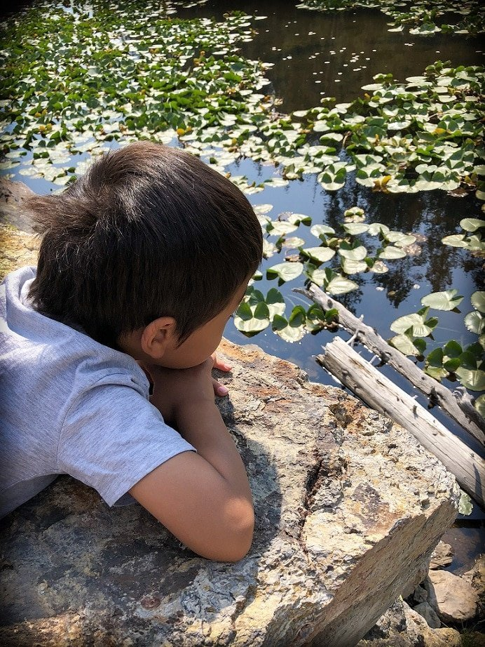 A boy lays on a boulder looking at lily pads in a pond at Yellowstone National Park during visit to Yellowstone with kids