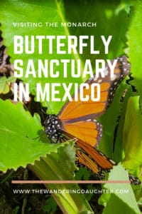 Visiting the Monarch Butterfly Sanctuary in Mexico   The Wandering Daughter
