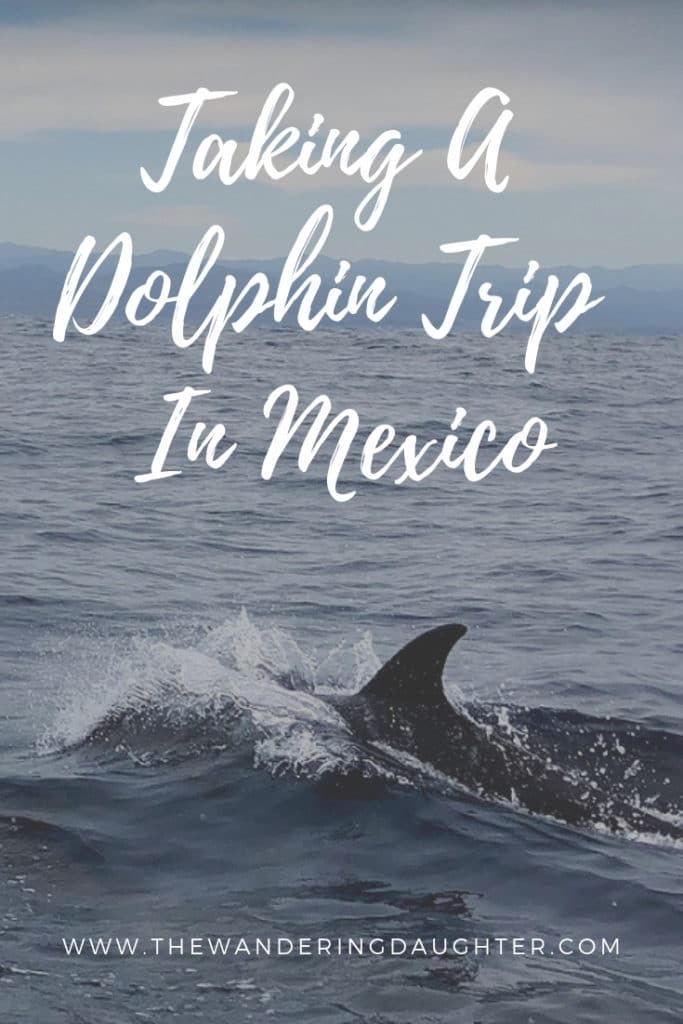 Taking A Dolphin Trip In Mexico | The Wandering Daughter |  Tips for taking a dolphin trip in Mexico. Where you can do dolphin watching and whale watching in Mexico with kids. Best companies for dolphin tours in Puerto Escondido, Mexico. #familytravel #dolphintours #Mexico #PuertoEscondido