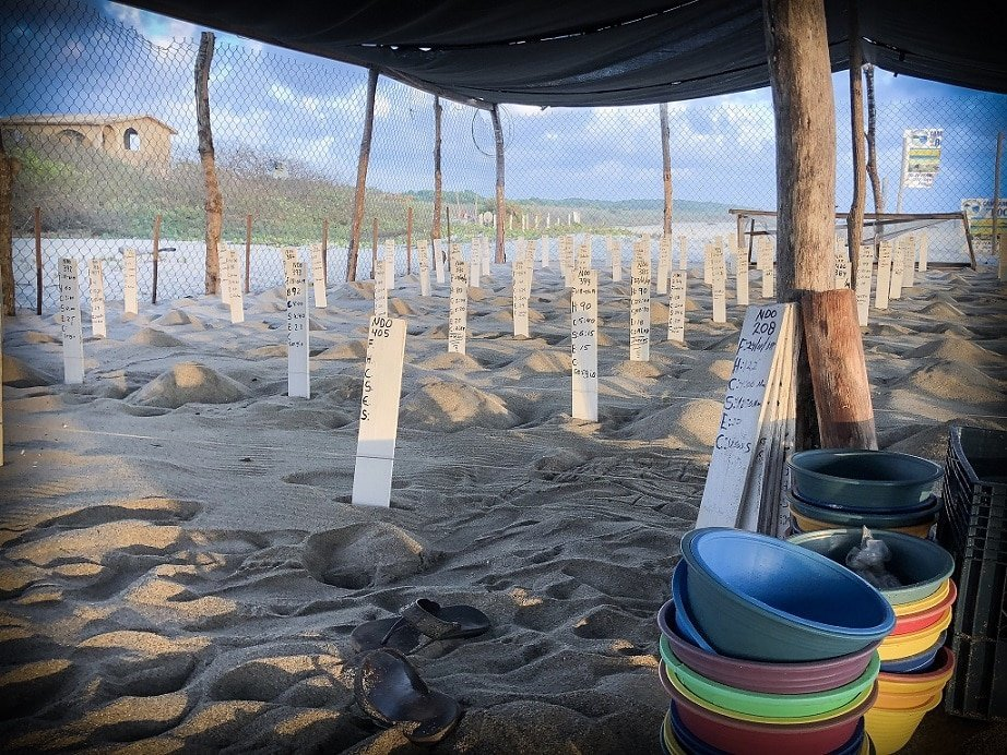 Turtle nests waiting for a turtle release in Puerto Escondido, Mexico