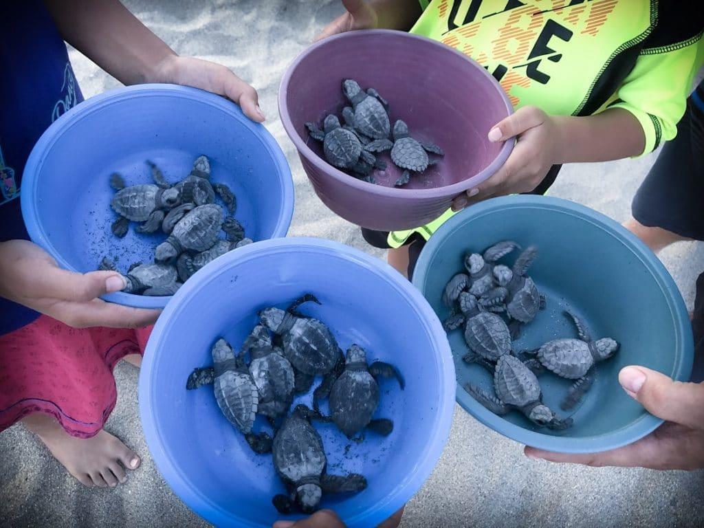 Turtle release in Puerto Escondido, Mexico