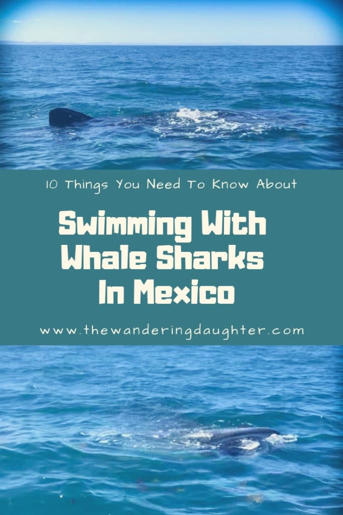 10 Things You Need To Know About Swimming With Whale Sharks In Mexico | The Wandering Daughter |  Whale shark snorkeling excursion in Baja Sur, Mexico with Todos Santos Eco Adventures. Swimming with whale sharks in Mexico with kids. #ad #familytravel #Mexico #whalesharks #Baja #LaPaz