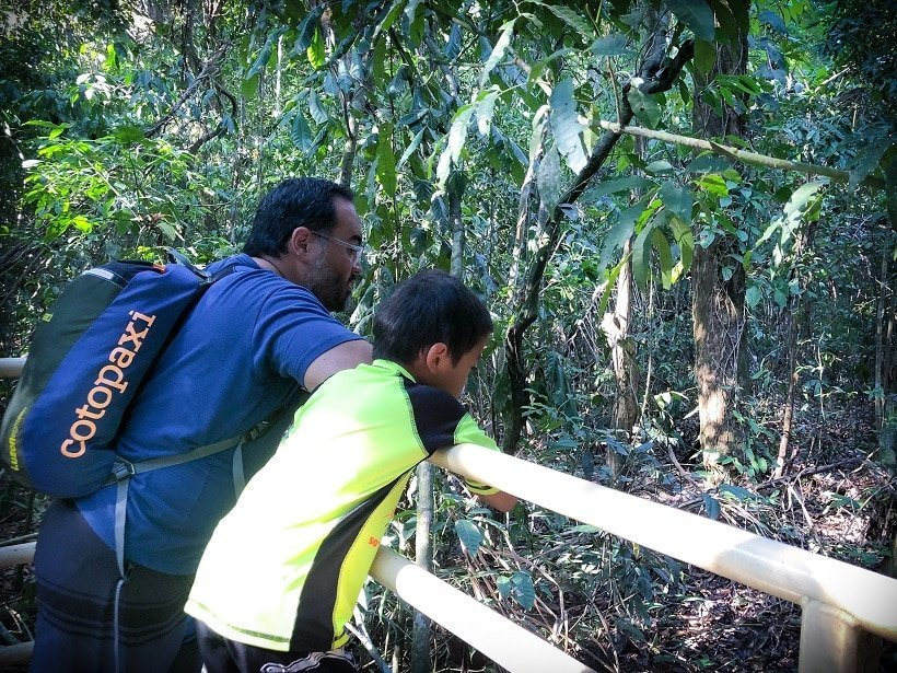 Looking for animals while visiting Costa Rica with kids