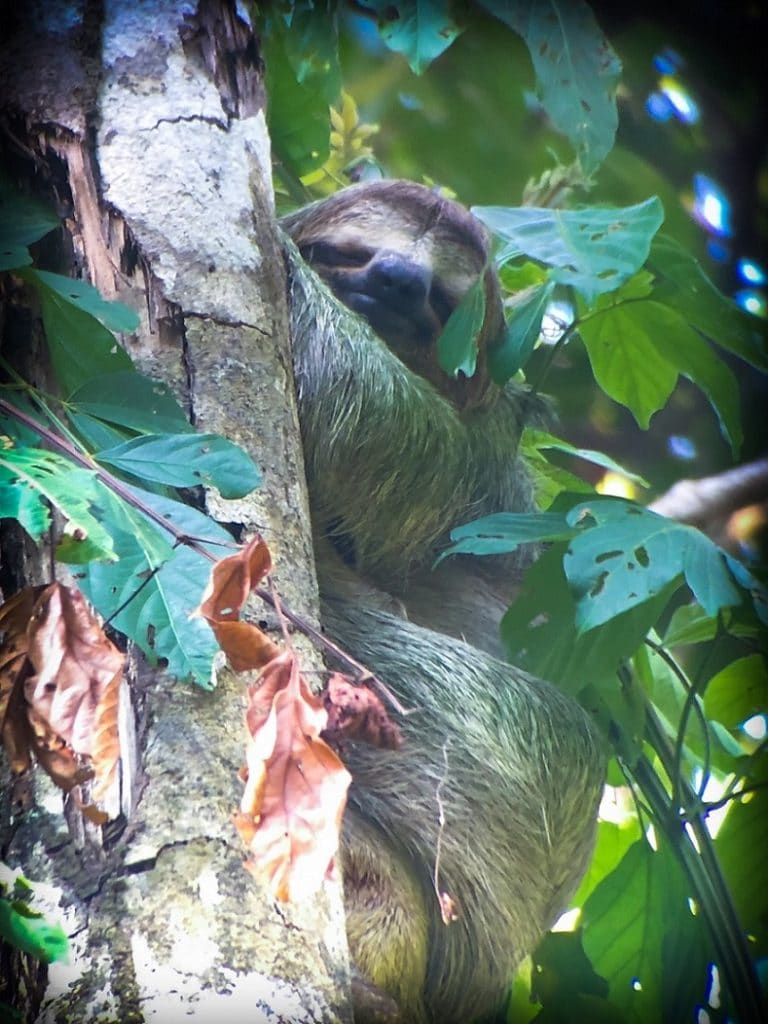 Seeing sloths while visiting Costa Rica with kids