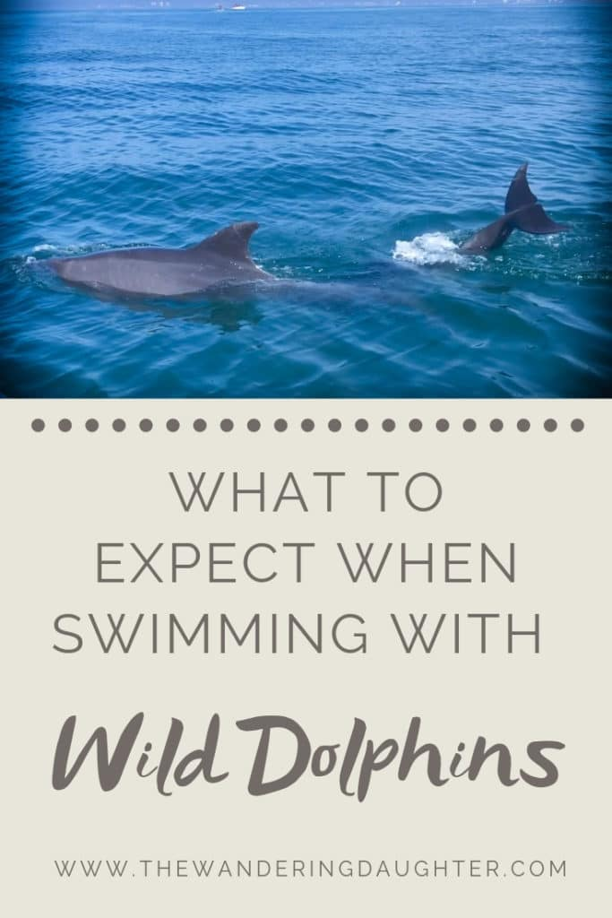 What To Expect When Swimming With Wild Dolphins | The Wandering Daughter