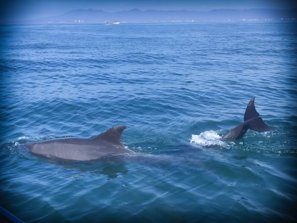 Wild dolphins in Mexico during an ethical family travel tour