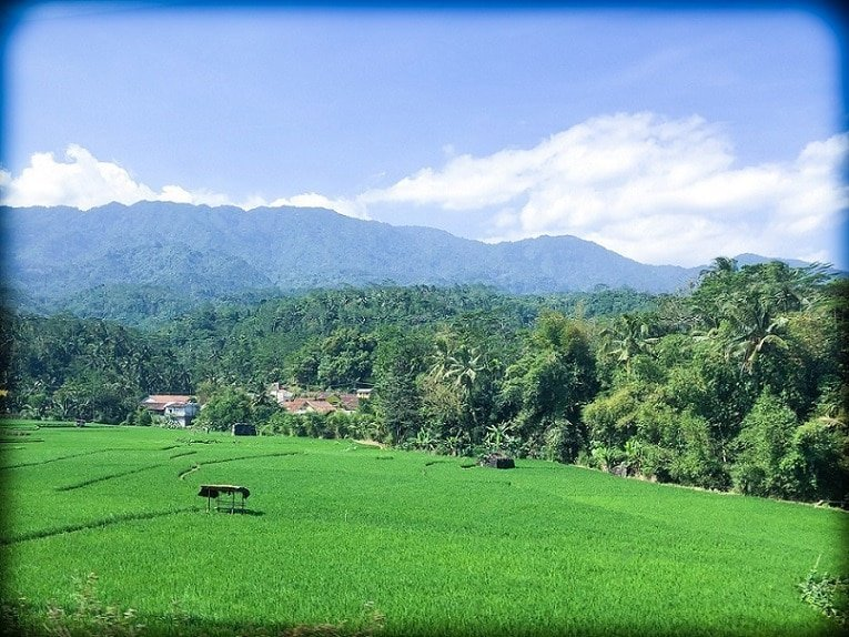 The countryside in Java, where you can learn Indonesian. Rice fields in the foreground, with palm trees and hills in the background