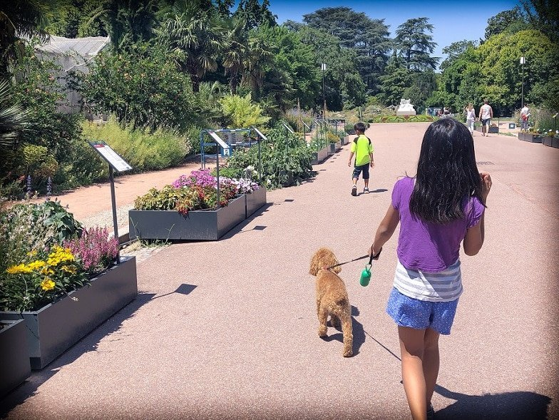 A child walks a dog in a park while taking part in sharing economy travel through housesitting.