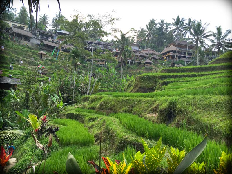 Rice terraces at Tegalalang Rice Terraces in Bali, Indonesia, one of the spots in a 10 day Bali itinerary